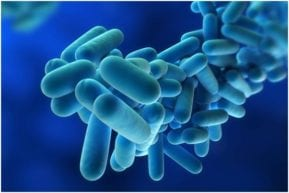 Our New Jersey personal injury attorneys report that Legionnaires disease is on the rise.